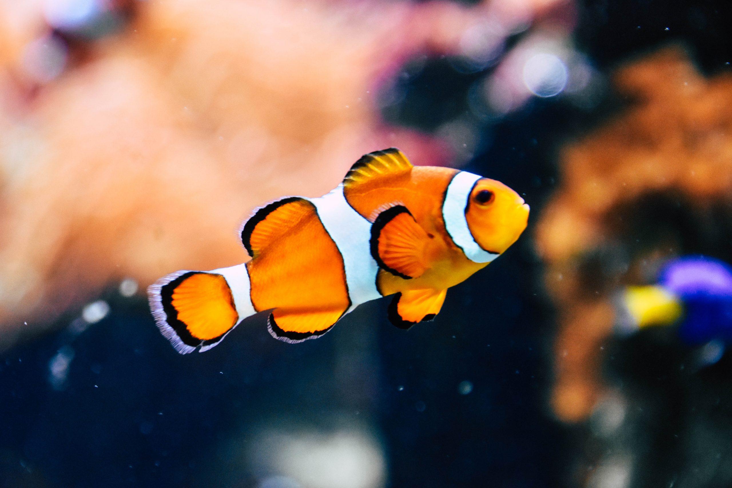 魚 リンネレンズ